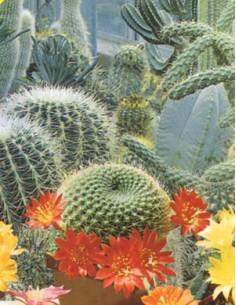 Cactacee y Plantas Carnosa en Mezcla