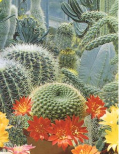 Mixture of Cactus and Succulent Plants