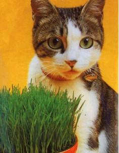 Erba dei Gatti